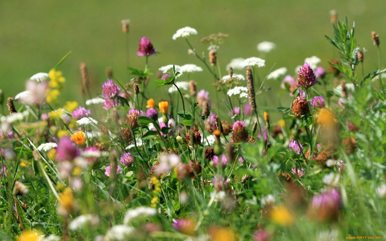 Все луковые цветы фото